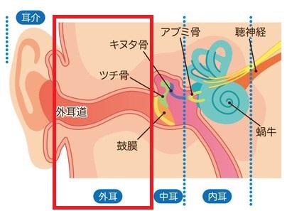 外耳炎の症状・原因・治療法