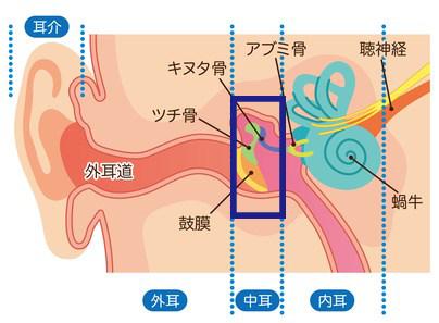 急性中耳炎の原因